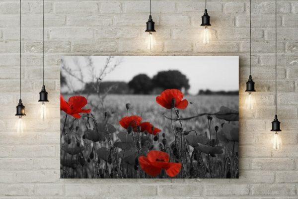 Tablou canvas Gray Poppy